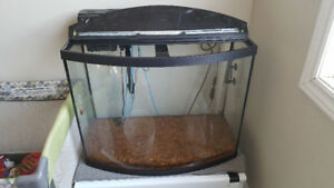 38 gallon bowfront tank cycled media included