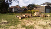 PROFESSIONAL TREE REMOVAL AND PRUNING SERVICE