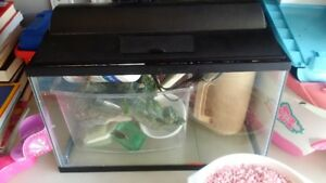 Fish Tank for Sale with required accessories