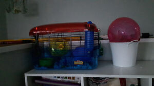 hampster and all the fixings
