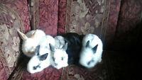 5 baby bunnies
