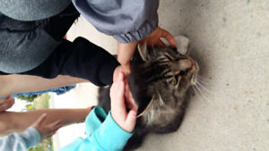 Found this tabby cat at Bessborough school