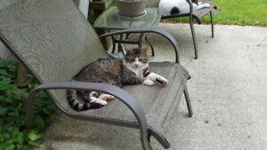 LOST CAT BEWARE