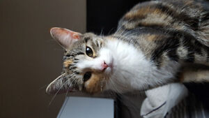 2 8 month old kittens FREE