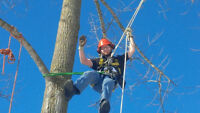 Urban Forester/Arborist  looking for job