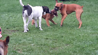 Prancing Paws Dog Sitting - Loving home Care - No kennels!!