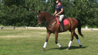 OPEN HOUSE at Tanglewood Farm & Equestrian Centre