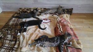 Portée de 4 chatons en adoption