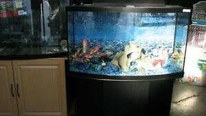 AQUARIUM SET-UP on DISPLAY Windsor Region Ontario image 2