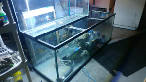 180 gallon and F5 canister Fluval filter, stand