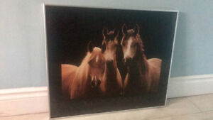 Glass Framed Horse Picture