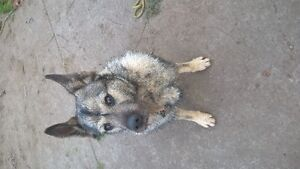 LOOKING FOR GOOD HOME FOR MY 1 yr old DOG