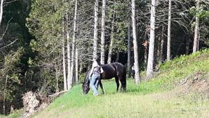 Pension pour chevaux exterieur