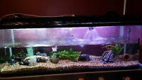 aquarium 150 gallons avec filtreur fx