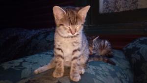 Kitten give away