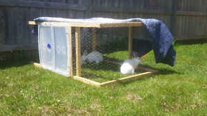 Bonded White Bunnies Seeking New Home, with EVERYTHING