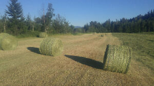 Hay for sale (round bales or squares)