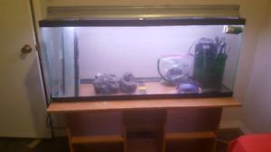 Complete 55gal aquarium set up.