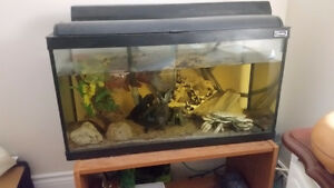 Free to a good home african butterfly fish, sajica cichlid, plec