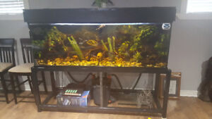 180 gallon fish tank, full set up