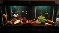 55 gallon freshwater aquarium