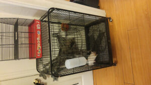 4 male rats and cage