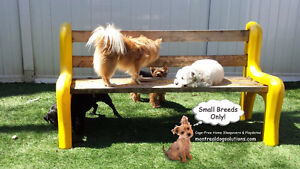 Dog Daycare & sleepovers for small dogs NO CAGES West Island Greater Montréal image 2