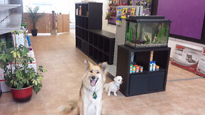 20% off your Dog's First Groom with Platinum Pooch Salon