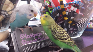 Exotic Birds and Small Pet Grooming