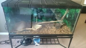 Very nice terrarium with iron/stone stand & ball python