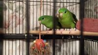 Bird on a Perch Rehome and Rescue