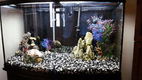 50 Gallon Deluxe Fish Tank