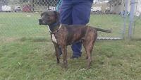 MABEL AVAIL @ PETS NEED LOVE 2 ANIMAL RESCUE