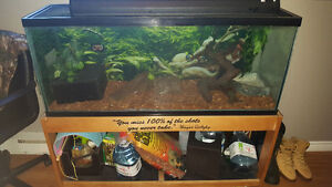 Large aquarium with stand and accesories