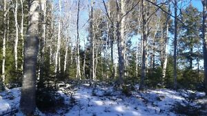 Gorgeous 6.5 acres in Pine Grove , hwy 224 (asking $42,000)