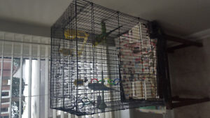 budgies with large cage and food