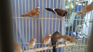 Finches!