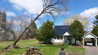 Tree service/removal/clean up