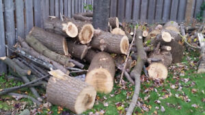 Free Firewood and Wood log for Pickup.