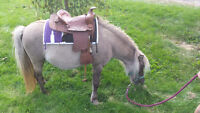 Small pony mare and her filly for sale