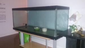 Aquarium Pour Reptile