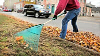 Need your Leaves RAKED and REMOVED, Then im your guy. Low Cost