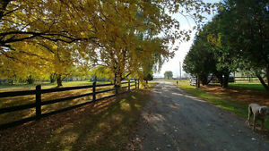 Looking for horse farm near Montreal ? potential income7500/mo