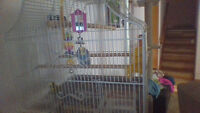 2 Budgies with cage