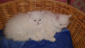 Adorables chatons!