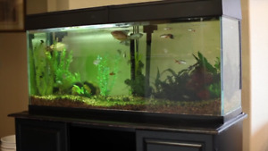 I'm looking to buy a 50 Gallon+ aquarium with canopy