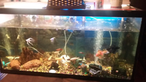 Beautiful huge aquarium 90g.!!!!!just 275$