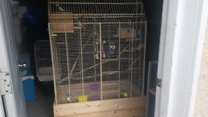 budgies and cockatails with lage cage