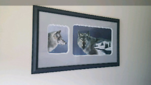 Wolf picture - Ducks Unlimited
