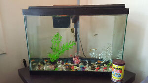 Fish with tank & accessories